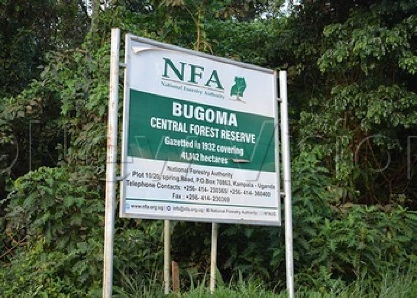 A big chunk of Buguma Forest has been destroyed by human activities including fetching firewood and charcoal for cooking