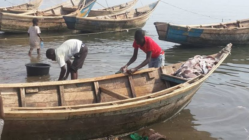 Fishermen working their boats at Kaiso. Kaiso is usually attacked by gunmen from DR Cong