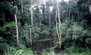 Protect Natural Forests For Sustainable Development
